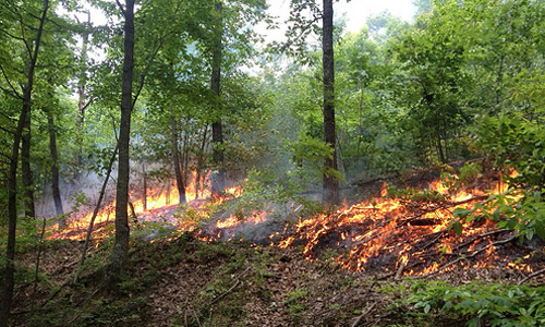 Schmidt: Invasive Species, Green Roofs, Prescribed Burns, 14,000 Acres