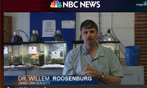 NBC News: Roosenburg Gives Turtles Headstart in Maryland Classrooms