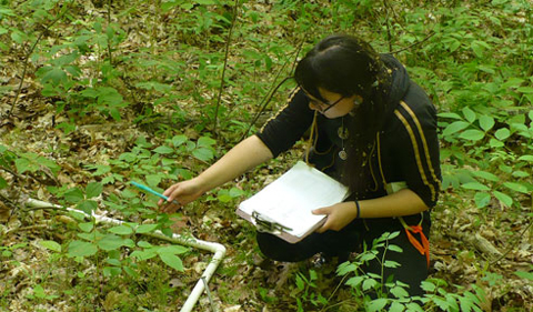 Marion Holmes in the field, studying plant growth