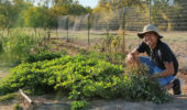 Undergrad Explores Peanut Plants as Natural Fertilizer