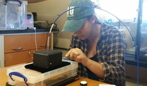 Reisenfeld using a spectrophotometer to measure brightness of bird feathers.