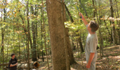 Eastern Forests Are on the Move—Here Come the Maples