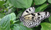 Boaler: Working in the Butterfly Conservatory