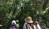 Boaler IDs South Florida Plants on Everglades Trip