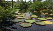 Boaler: A trip to Naples Botanical Garden