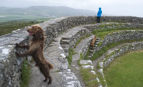An Irish field spaniel (named Buttons) takes in the view from the Grianán Ailigh, a ringfort in the Inishowen peninsula of County Donegal. The fort was originally built in about the 6th or 7th century CE. It was heavily restored in the 19th century, and is now a National Monument (of the Republic of Ireland, where it is located).