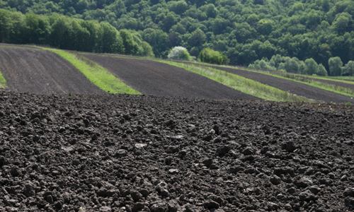 How Much Appetite Does Soil Have for Climate Change?