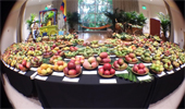 The 22nd Annual International Mango Festival