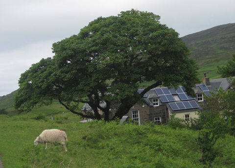 Sustainable farming on the Isle of Eigg. Photo by Sarah Sands