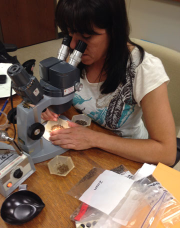 Field School also includes work in the lab, analyzing and identifying samples.