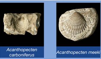 Digital Atlas sample fossils