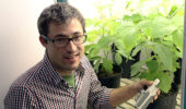 Nicholas Tomeok monitors the health of soybean plants, his research subjects for several studies, as they grow in environmentally controlled chambers.