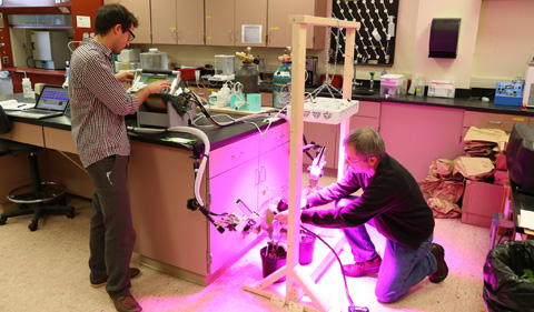 Nicholas Tomeo and David Rosenthal in lab, working with plants