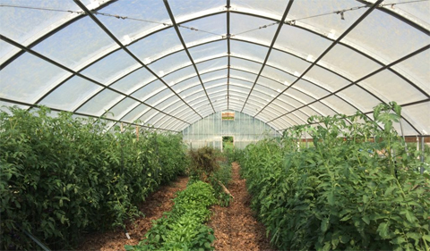 High Tunnel at Plant Biology Learning Garden