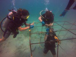 Scuba divers repariring coral reefs