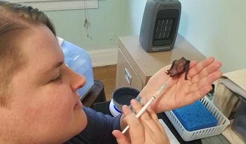 AP Feeney feeding young bat Bartok with syringe