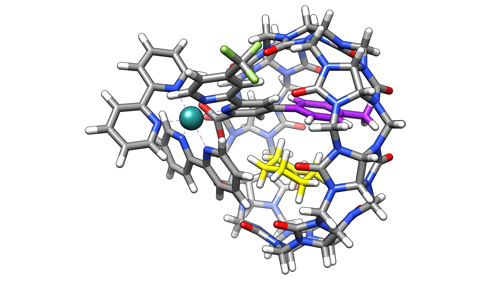 Cucurbit[8]uril macrocycle