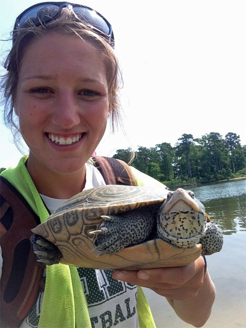 Graduate student and alumna Alayna Tokash worked closely with diamondback terrapins at Poplar Island.