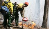 Prescribed Burning on the Wayne National Forest