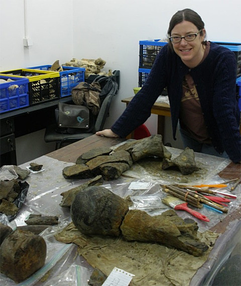 Dr. Sabrina Curran in lab at Institute of Speleology in Romania with the newly excavated partial mammoth skeleton