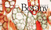 Cover of American Journal of Botany featuring microscopic photo of moss.