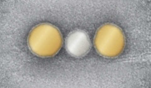 Gold and silver nanoparticles