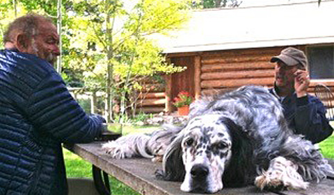 Jim Harrison, Robert DeMott, and DeMott's English setter, Meadow,  at Jim and Linda Harrison's house in Livingston, MT, in 2013. Photo by Kate Fox.