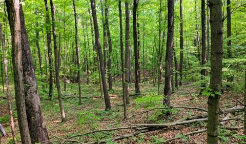 Wayne National Forest scene. Photo Credit: Kyle Brooks