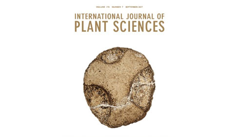 Cover of the International Journal of Plant Sciences featuring permineralized cornalean fruit