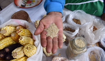 Hand holding seeds, representing seed-saving practices
