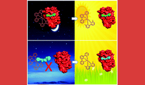 illustration for Caging the uncageable: using metal complex release for photochemical control over irreversible inhibition