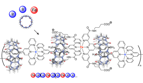 The self-assembly into dynamic oligomers of Cucurbit[8]uril (CB[8]), a positive ditopic Ir(III) bis-terpyridine complex, and a negative ditopic Fe(II) bis-terpyridine complex flanked by four butyrate side chains