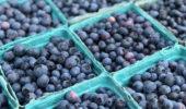 Veggie Sales | at OHIO Student Farm, June 28