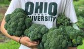 Veggie Sale | at Atrium, June 19 | at Learning Garden, June 22