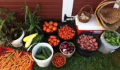 Buckets and baskets of vegetables from the OHIO student farm.