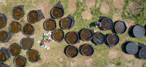 al view of cattletank mesocosms located on OHIO campus (photo: Ben Siegel)