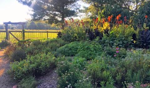 Julie Scott's flower garden in bloom at the OHIO Student Farm.