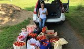 Margaret Sheskey poses with the tomatoes harvested from the OHIO Student Farm before loading them into her car to transport to the Nelsonville Food Cupboard.