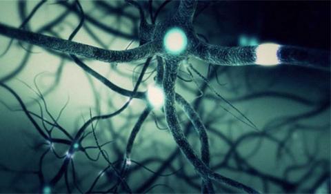 neuroscience illustration of neurons