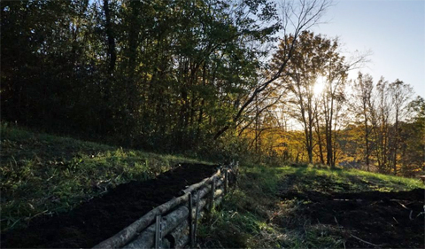 The sun shines through the trees onto a raised bed built on the farm using timber from the property.