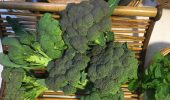 Broccoli from the OHIO Student Farm for sale at the Grover Center Market.
