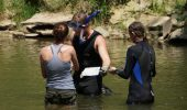 Three students hip-deep in the search for hellbenders. From left, Christine Hanson, Matt Kaunert, and a high school student from Penta Career Center.