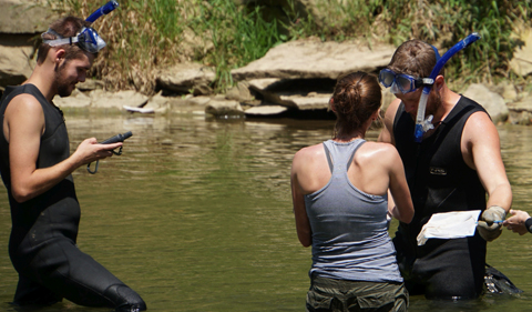 Students are hip-deep in the river, searching for hellbenders.