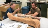 Dr. Pat O'Connor (left) and Dr. Eric Gorscak work in their lab at Ohio documenting fossil discoveries.