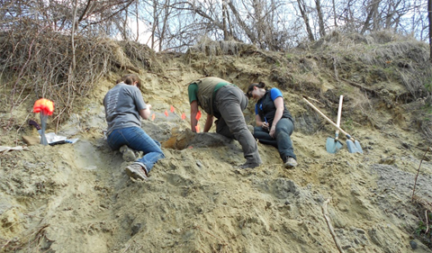From left, Sabrina Curran (Ohio University), Alex Petculescu (Emil Racoviţa Institute of Speleology), Claire Terhune (University of Ark) excavating a mammoth on a hillside om Romania.