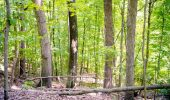 Old hardwood forest