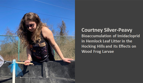 Courtney Silver-Peavey: Bioaccumulation of imidactoprid in hemlock leaf litter in the Hocking Hills and its effects on wood frog larvae