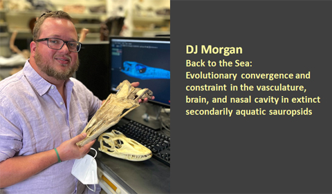 """Donald Morgan: """"Back to the Sea: Evolutionary convergence and constraint in the vasculature, brain and nasal cavity in extinct secondarily aquatic sauropsids"""
