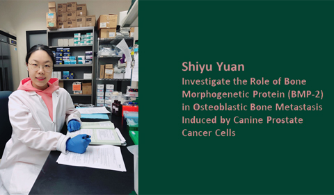 Shiyu Yuan: Investigate the rle of bone morphogenetic protein (BMP-2) in osteoblastic bone metastasis induced by canine prostate cancer cells