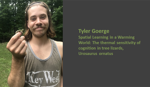 Tyler Goerge: Spacial learning in a warming world: the termal sensitivity of cognition in tree lizards, Urosaurus ornatus